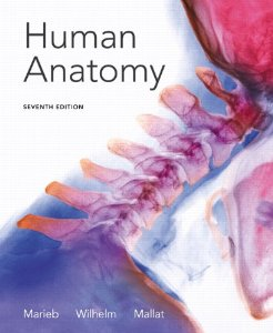 Buy: Test Bank for Human Anatomy