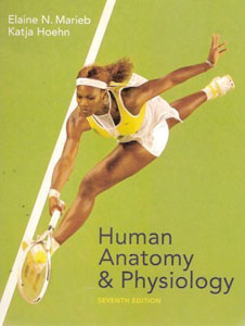 Buy: Test Bank for Human Anatomy And Physiology