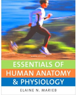 Buy: Test Bank for Essentials of Human Anatomy & Physiology
