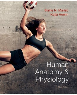 Buy: Test Bank for Human Anatomy & Physiology